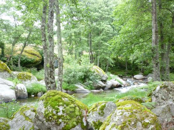 Bosque del Valle del Tiétar en la Sierra de Gredos. En este escenario se dearrolló el X Encuentro