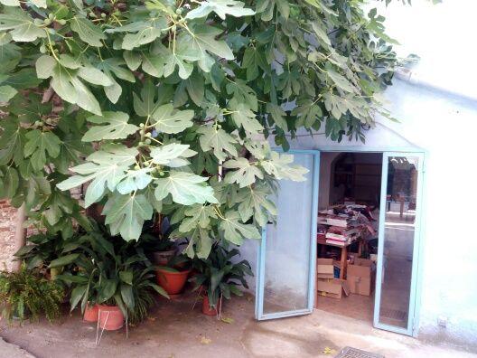 La librería tiene un patio donde se realizan talleres. El patio tiene una higuera.