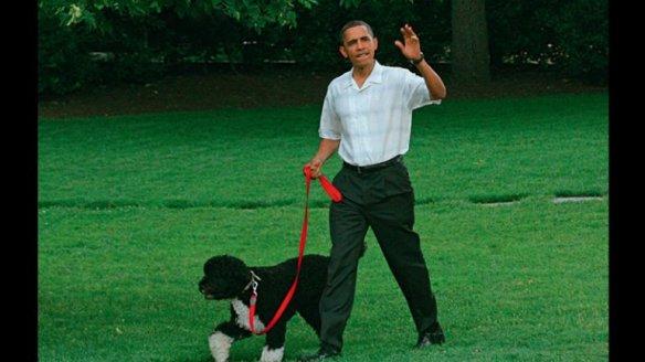 """Barack Obama con su perro de aguas portugués. El cachorro blanco y negro fue bautizado con el nombre de """"Bo""""."""